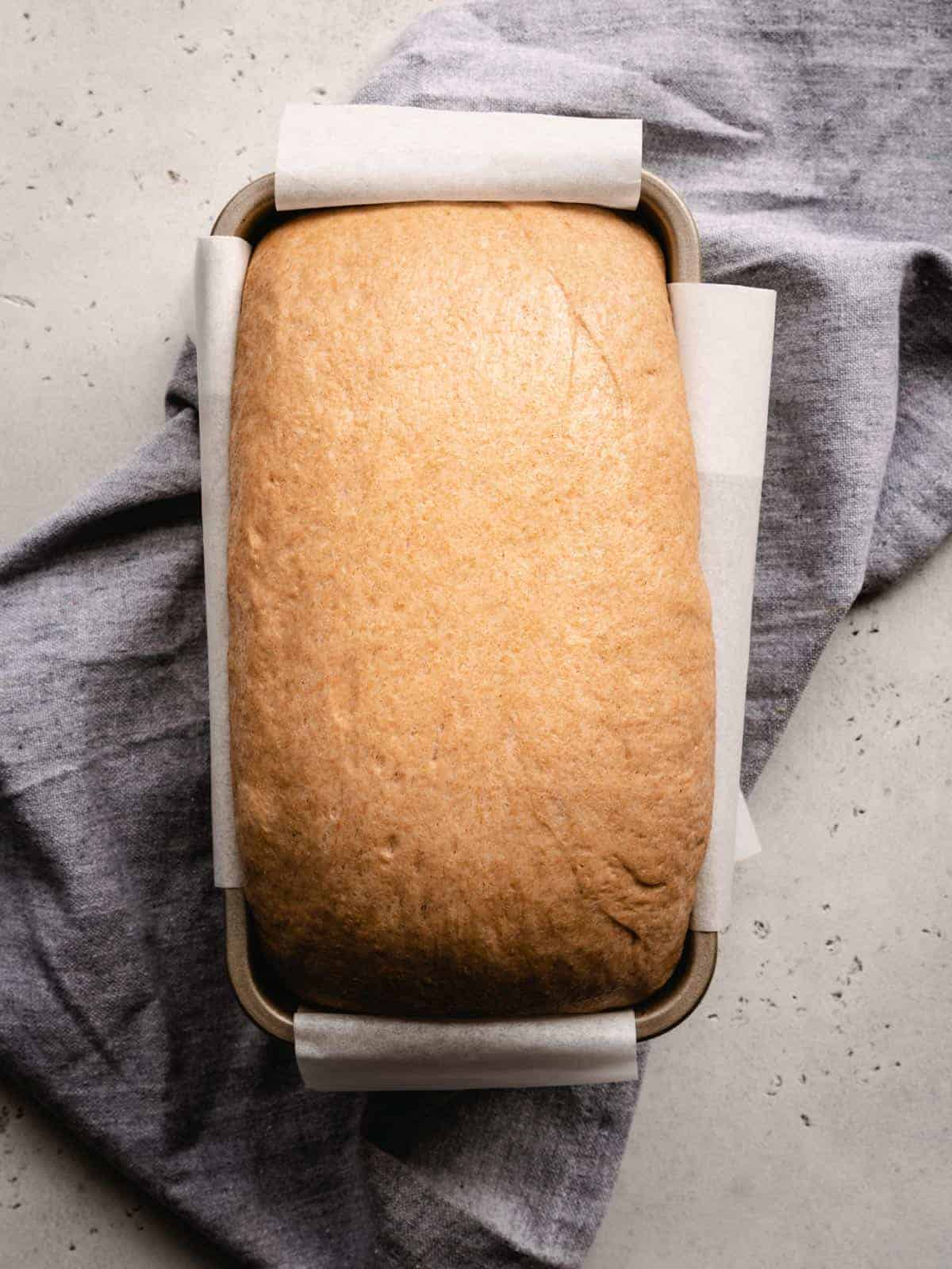 proofed bread dough in a loaf pan