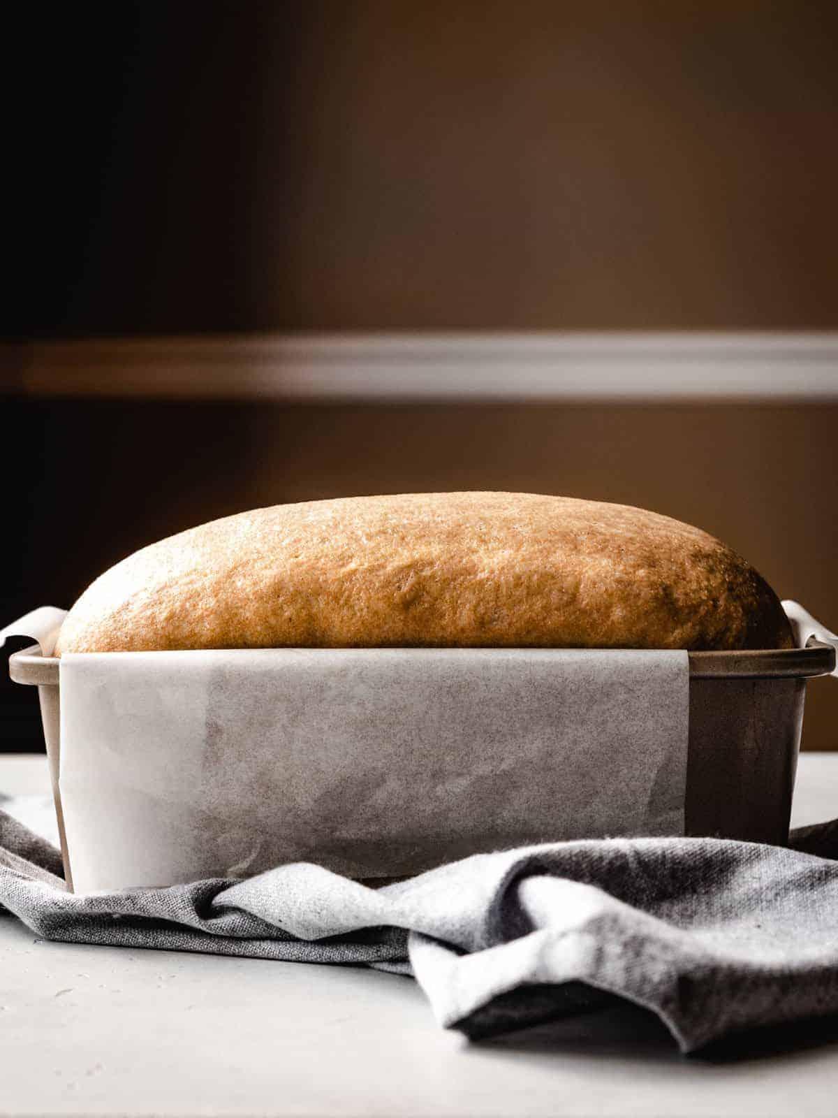 proofed honey whole wheat sandwich bread in a loaf pan