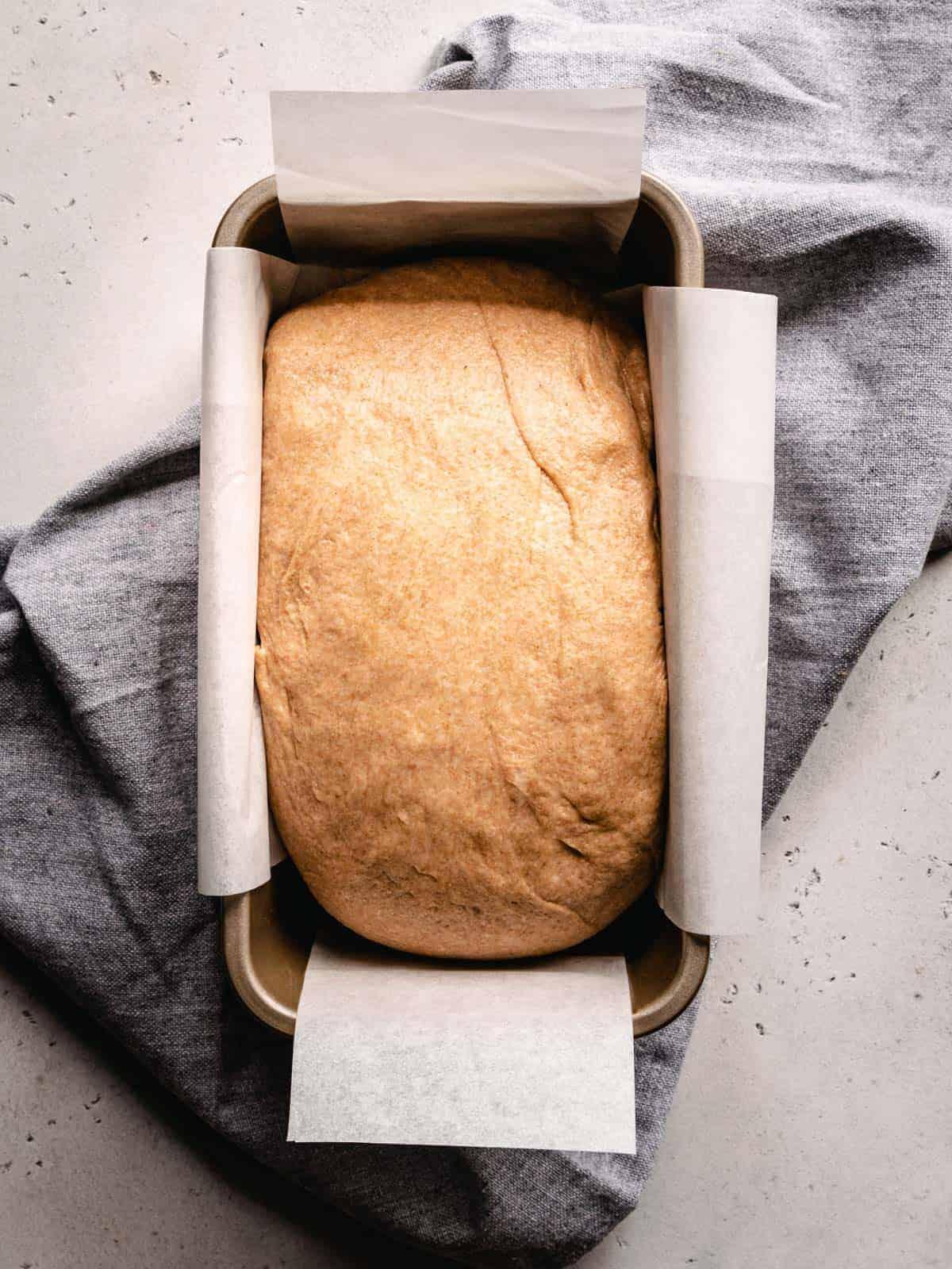 proofed sandwich bread in a loaf pan